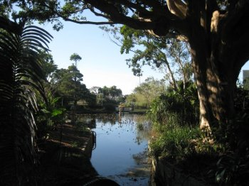 View of the Royal Botanic Gardens, Sydney